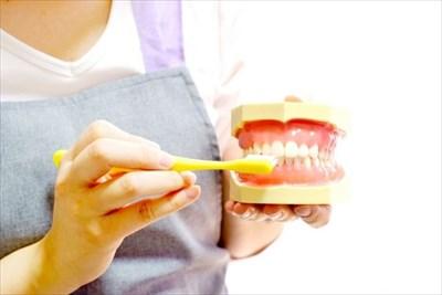 歯磨きのやり方を教える人
